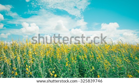 Yellow flower field under the blue sky, old color style