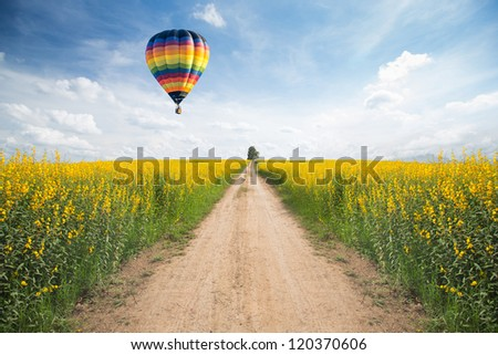 Yellow flower field with a road - stock photo