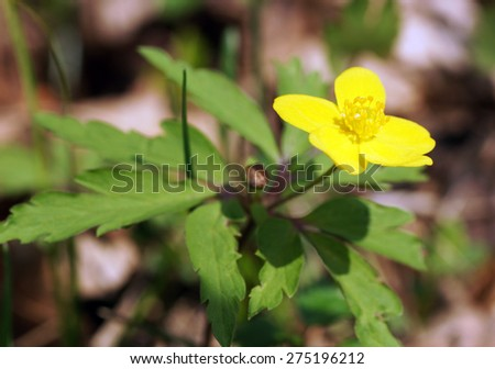 Yellow flower in the garden. Close up.                                - stock photo