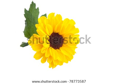 yellow flower isolated on a white background - stock photo