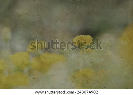 Yellow Flower Marigold bloom background, vintage paper texture - stock photo