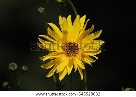Yellow flower on a dark background.