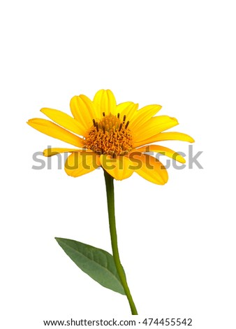 yellow flower on a stem isolated on white background