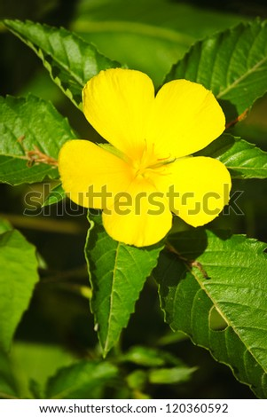 Yellow flower on green background./Yellow flower. - stock photo