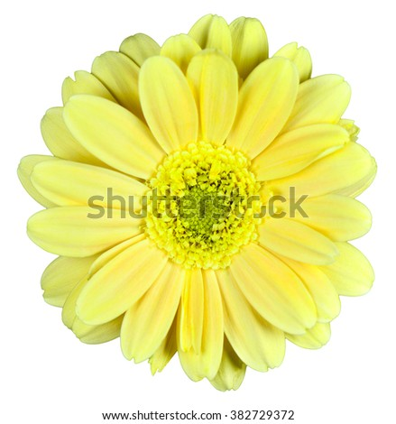 Yellow flower on isolated background - stock photo