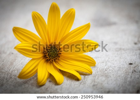 Yellow flower on wooden background - stock photo
