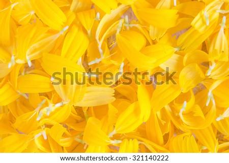 Yellow flower petals - stock photo