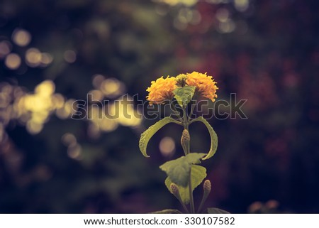 Yellow flower vintage style ,nature background - stock photo