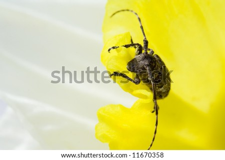 Yellow flower with beetle
