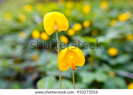 Yellow flower with green leaf blurry background,select focus with shallow depth of field. - stock photo