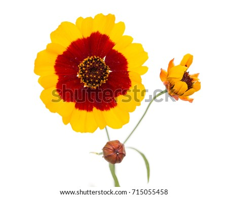 Yellow flower red center stock photo 100 legal protection yellow flower with red center mightylinksfo