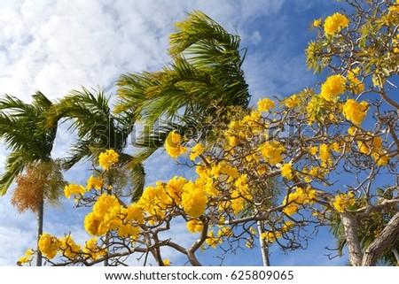 Yellow flowers palm trees against blue stock photo 100 legal yellow flowers and palm trees against a blue sky mightylinksfo