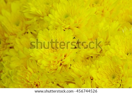 yellow flowers  background  background,select focus with shallow depth of field:ideal use for background - stock photo