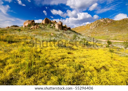 Yellow flowers blooming in cloudy blue sky during spring - stock photo