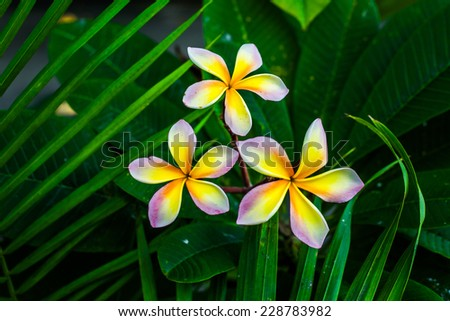 Yellow flowers blossoming in spring time, natural background
