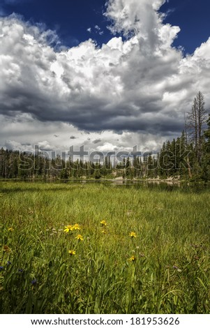 Yellow flowers in a huge meadow that leads up to a mountain lake called Butterfly lake with thunderstorms brewing in the Unita's national forest in Utah USA/ Yellow Flowers in the Meadow - stock photo