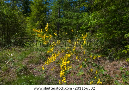 Yellow flowers in a sunny forest in spring - stock photo