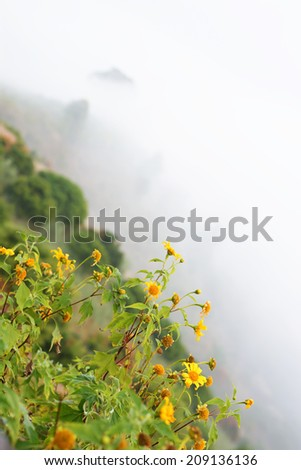 yellow flowers in the mist.