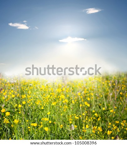 Yellow flowers on a meadow.