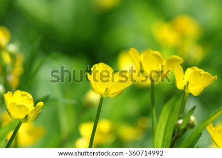 yellow flowers on green abstract background, blurred vibrant colors - stock photo