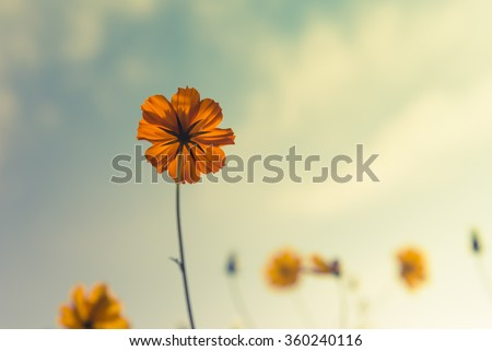 Yellow flowers on light blue pastel shabby with textured background, soft focus and delicate, text space concept - stock photo