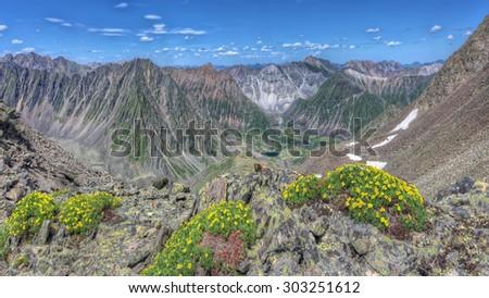 Yellow flowers (Potentilla biflora) on a background of mountain ranges. Eastern Sayan. The Republic Of Buryatia - stock photo