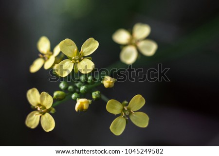 Yellow flowers rounded 4 petals stock photo download now yellow flowers rounded with 4 petals mightylinksfo