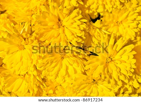 Yellow Flowers Texture Background