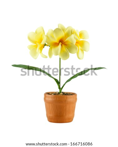 Yellow frangipani flower ( Artificial flowers made from cloth) in brown pot isolated on white background