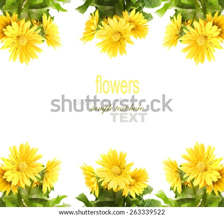 Yellow Gerber with copy space isolated on white - stock photo