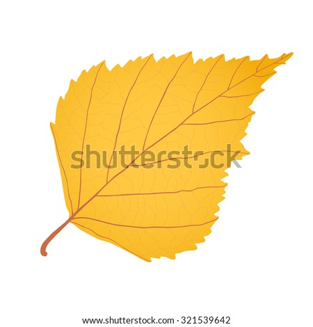 Yellow gold birch leaf as autumn symbol and icon of the fall weather isolated white background. - stock photo