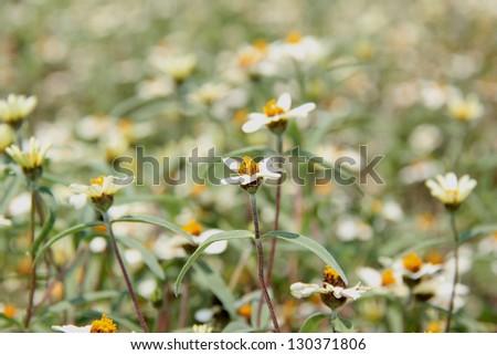 yellow grass flower, pollen - stock photo