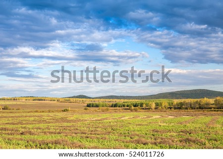 yellow grassland under blue sky in Arxan, Inner mongolia, China