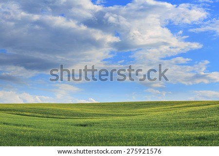 Yellow-green field and beautiful clouds - stock photo