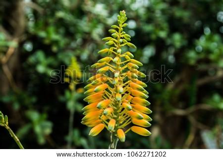 Yellow hanging flowers stock photo royalty free 1062271202 yellow hanging flowers mightylinksfo