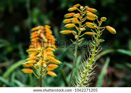 Yellow hanging flowers stock photo royalty free 1062271205 yellow hanging flowers mightylinksfo