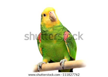 Yellow head Amazon (Amazona oratrix), isolated on white - stock photo