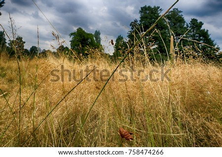 Yellow, high, autumn grass close-up. Autumn day. Dry grass in the field.