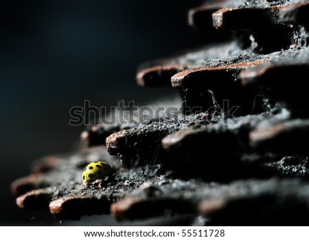 Yellow insect on rusty metal - stock photo