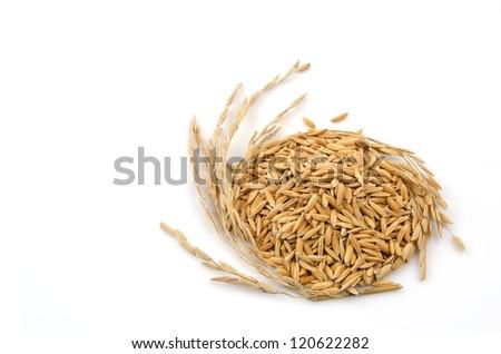 yellow jasmine rice rice on white background - stock photo