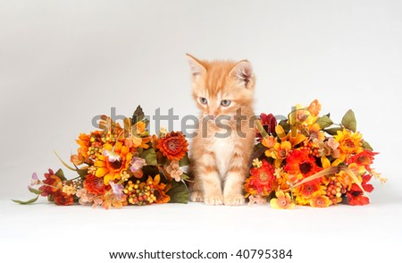 Yellow kitten and fall decorations