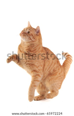 Yellow kitten is trying to catch something - stock photo