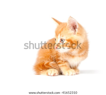 Yellow kitten laying down on white background