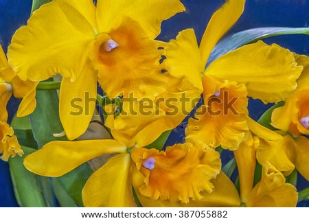 Yellow laelia orchid blooms,digital oil painting