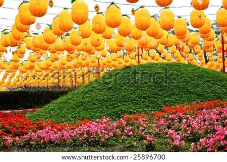 Yellow lanterns on the field - stock photo