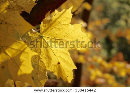 Yellow leaf.