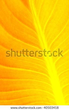 Yellow Leaf - stock photo