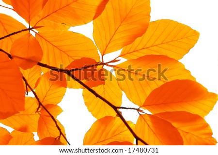 yellow leaf background close up - stock photo