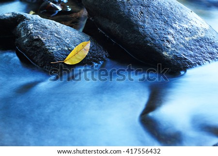 Yellow Leaf on a rock in a small stream.select focus. - stock photo