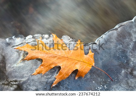 Yellow leaf on the ice of winter flowing river.  Beautiful Christmas background. - stock photo